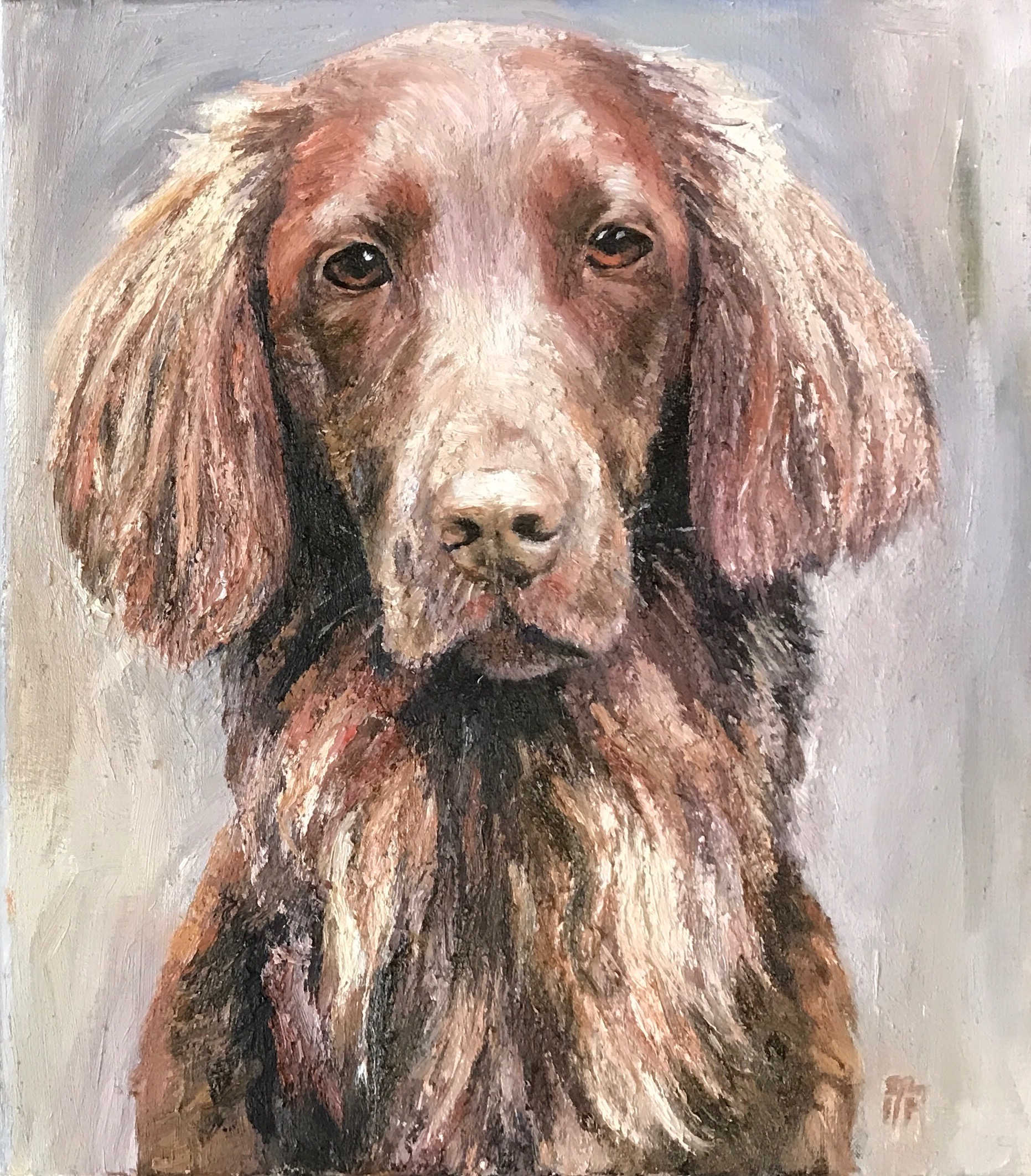 Flat Coated Retriever Brown